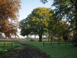 Woodland Burial